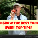 How to Grow the Best Tomatoes Ever!  Top Tips – Video
