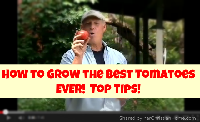 How-to-grow-the-best-tomoatoes-ever