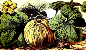 Pumpkin-e-gf