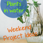 Weekend Project Ideas: Grow Beautiful Indoor Plants In Glass Containers