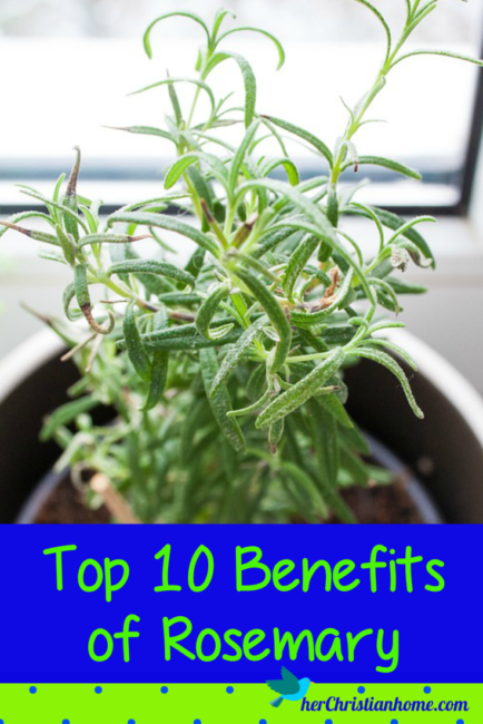 top 10 beneifs of rosemary
