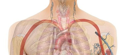 ACV Stimulates Lymph Action