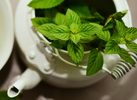 mint helps fight the effects of colds